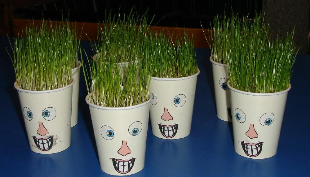grassheads