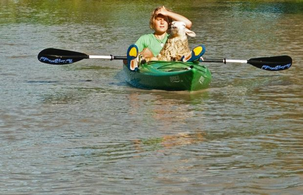 sheep in kayak rescue